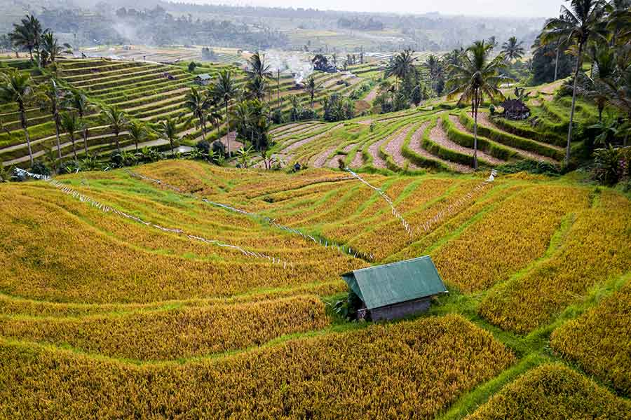 How-to-see-the-most-scenic-Bali-locations | Jutiluwih rice terraces in Bali