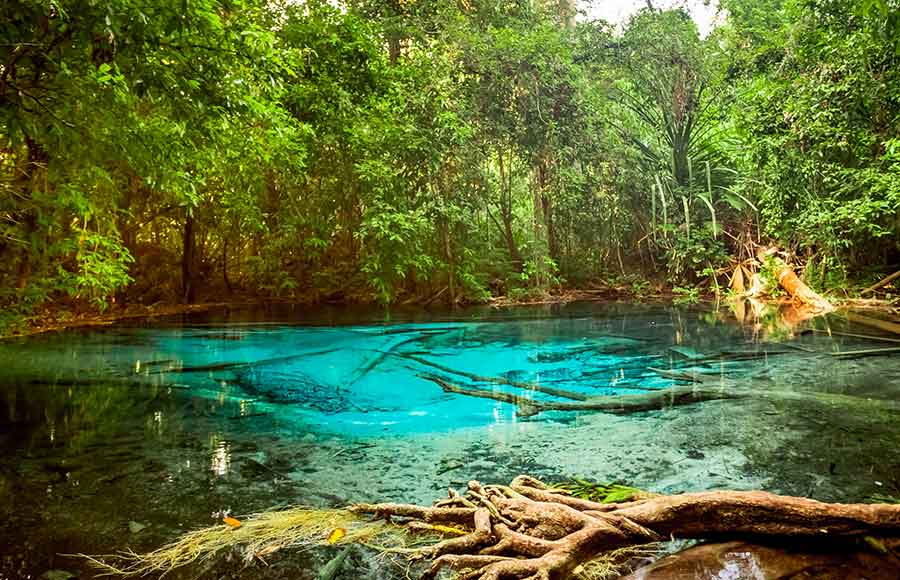 The Emerald Pool in Krabi