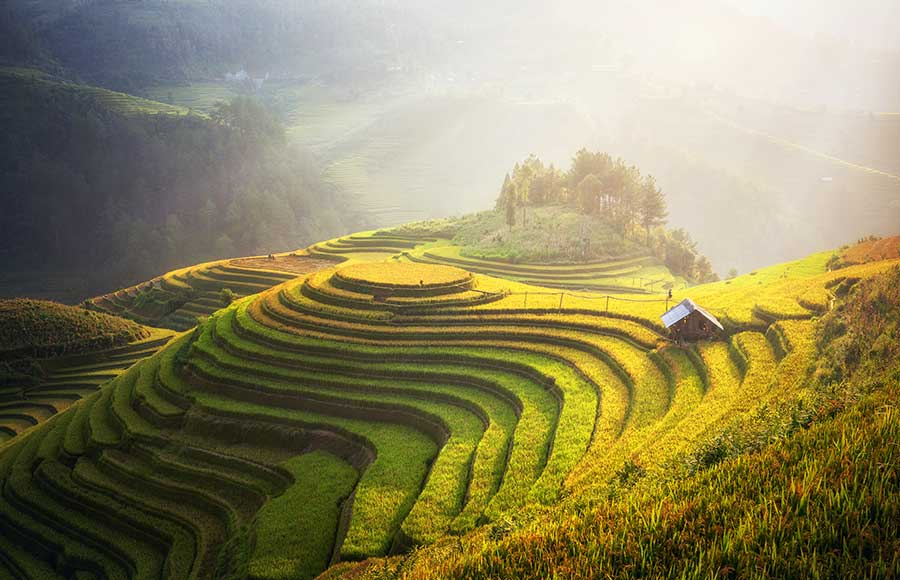 Best time for Sapa trekking? Tips and advice for you to find the best time to visit Sapa and to experience the Sapa trekking