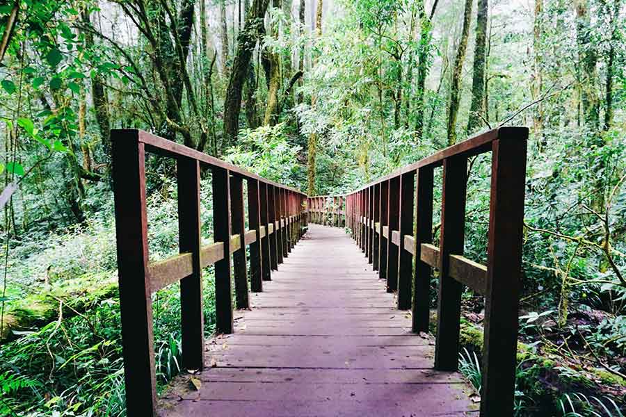 Guide-for-the-best-Doi-Inthanon-trekking | How to reach Doi Inthanon from Chiang Mai